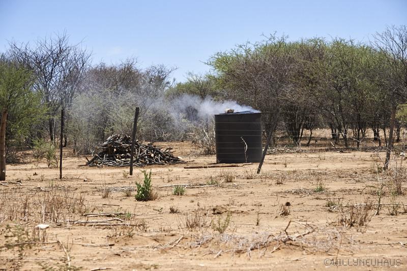 willy neuhaus doch noch spezial safari 219 millionen jahre in die vergangenheit. Black Bedroom Furniture Sets. Home Design Ideas